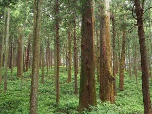 注文住宅をお考えの方へ!木材の種類について説明します!
