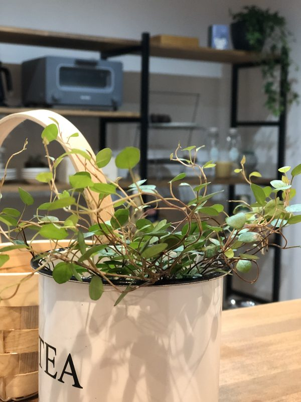 豊橋市 新築 自然素材と地下住宅/ 植物がぐんぐん育つ家