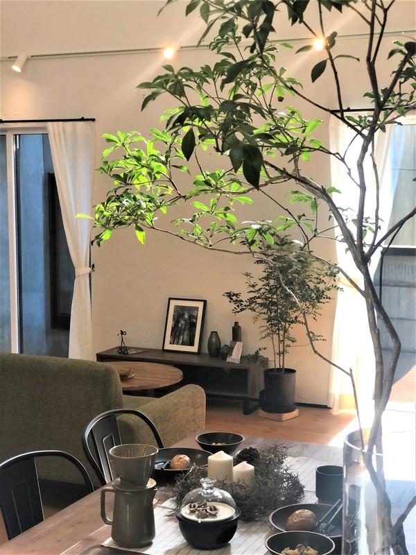 豊橋市 新築 自然素材と地下住宅 / まもなくお披露目!